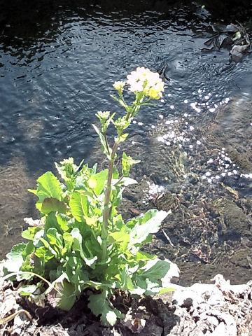 露出もピントも後ろの川に合ってしまっている...オレは花を撮りたかったんだよ~!